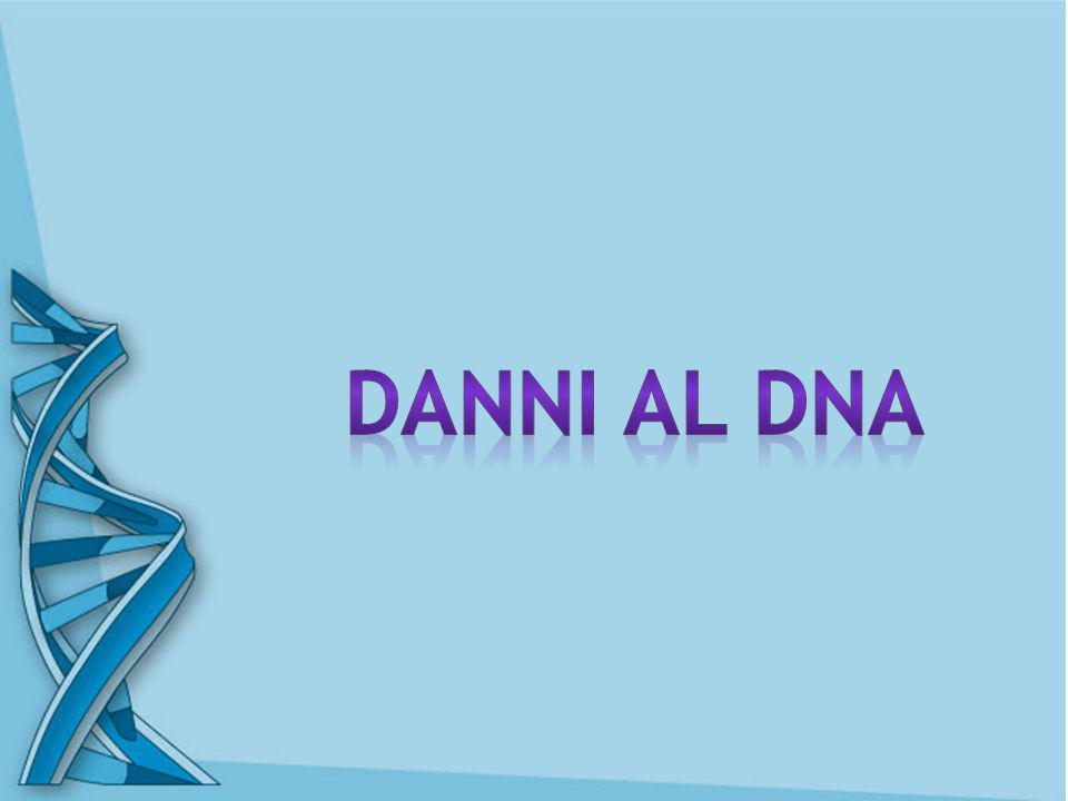 Danni al DNA