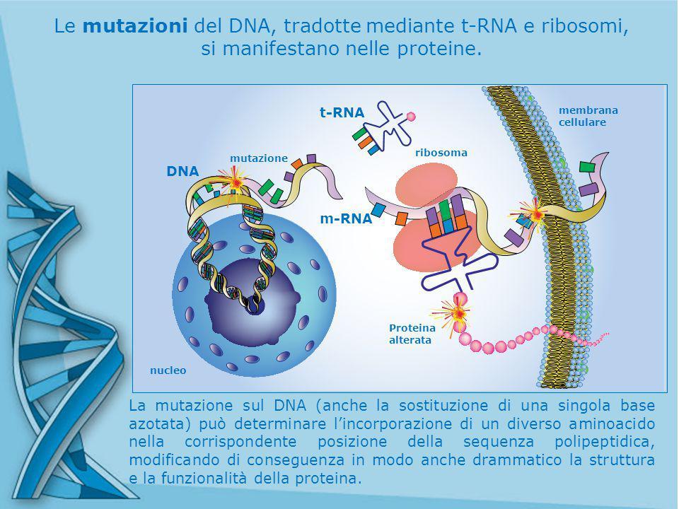Le mutazioni del DNA, tradotte mediante t-RNA e ribosomi,