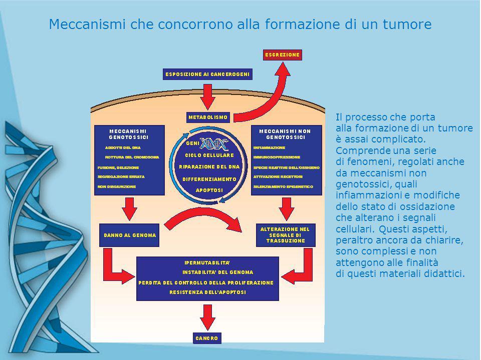 Meccanismi che concorrono alla formazione di un tumore