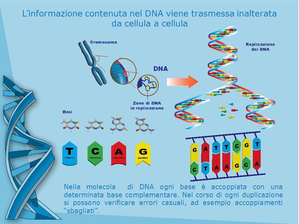 L'informazione contenuta nel DNA viene trasmessa inalterata