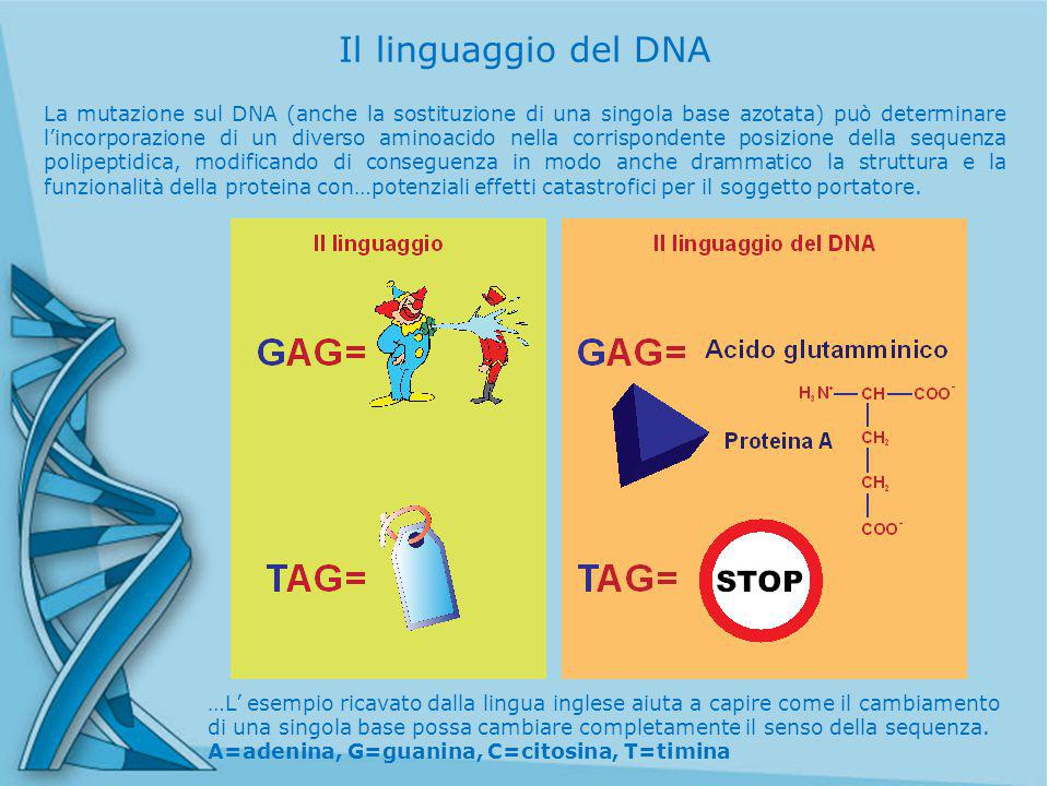 Il linguaggio del DNA