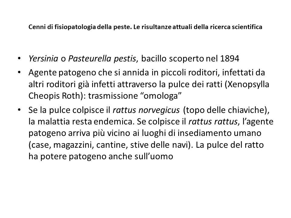 Yersinia o Pasteurella pestis, bacillo scoperto nel 1894
