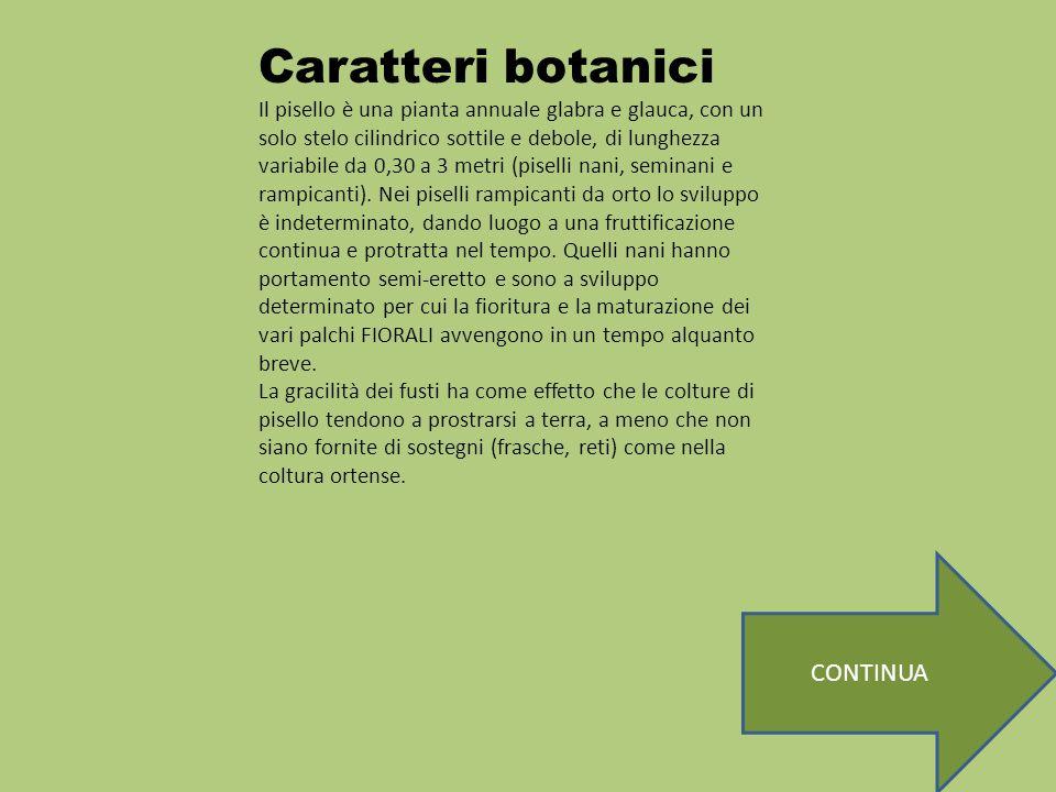 Caratteri botanici CONTINUA