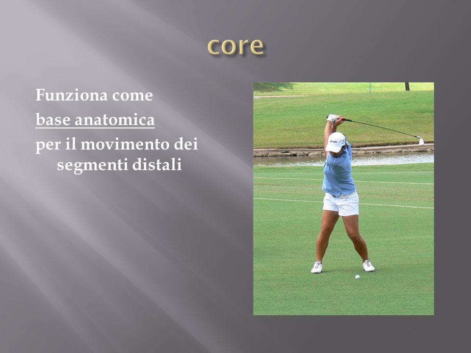 core Funziona come base anatomica per il movimento dei segmenti distali