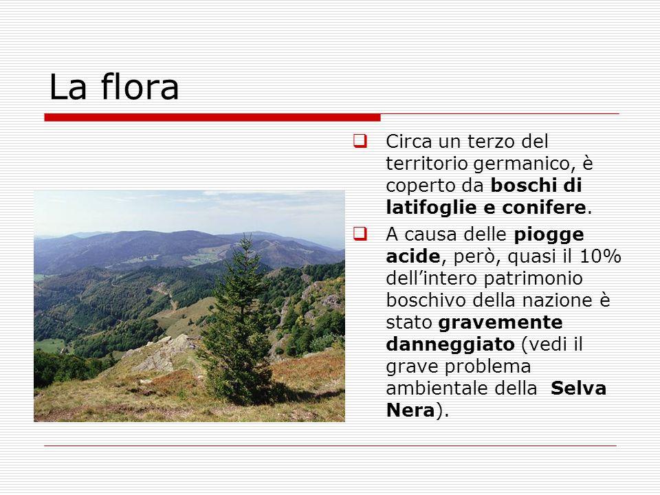 La flora Circa un terzo del territorio germanico, è coperto da boschi di latifoglie e conifere.