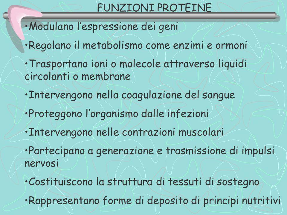 FUNZIONI PROTEINE Modulano l'espressione dei geni. Regolano il metabolismo come enzimi e ormoni.