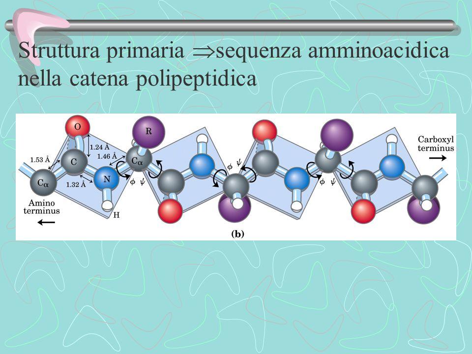 Struttura primaria sequenza amminoacidica nella catena polipeptidica