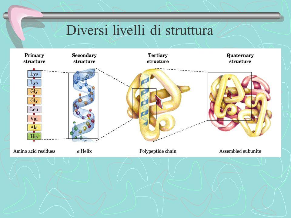 Diversi livelli di struttura