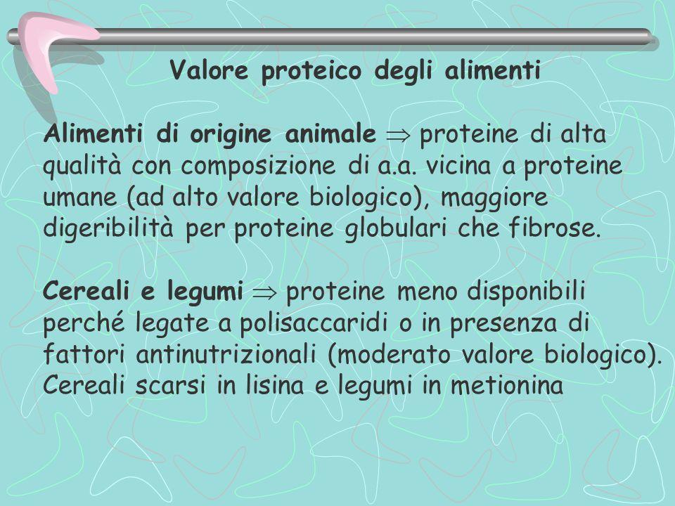 Valore proteico degli alimenti