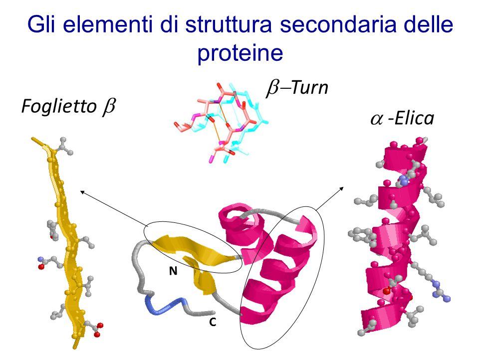 Gli elementi di struttura secondaria delle proteine