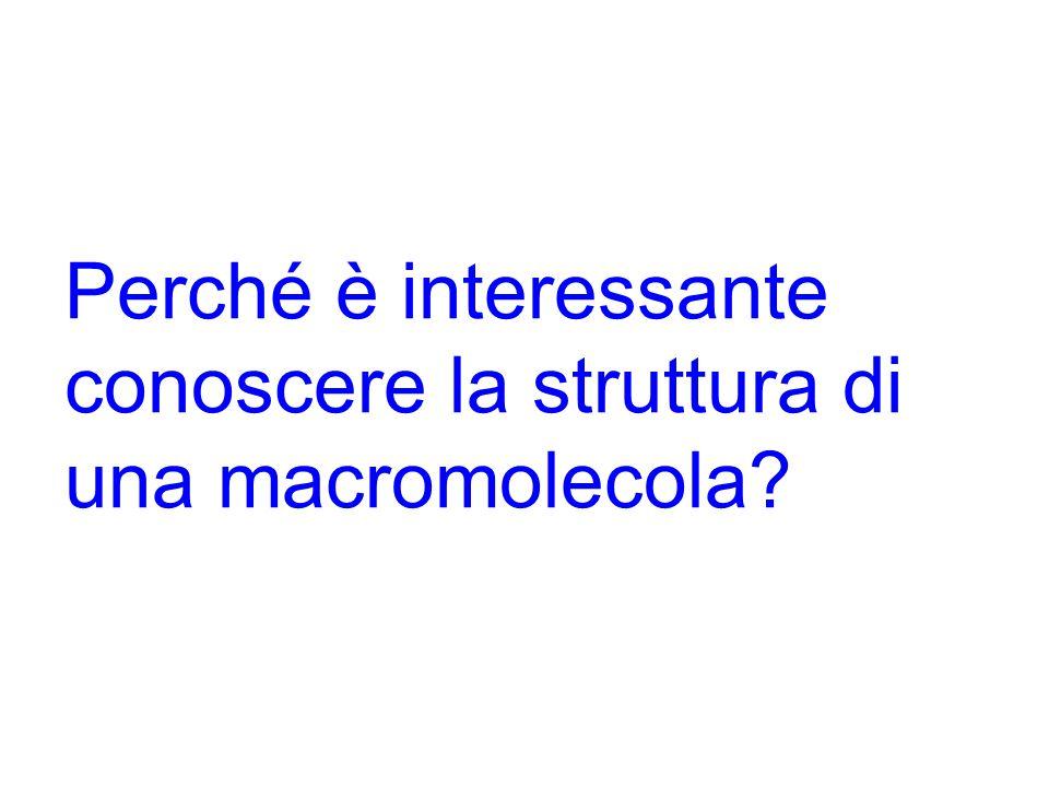 Perché è interessante conoscere la struttura di una macromolecola