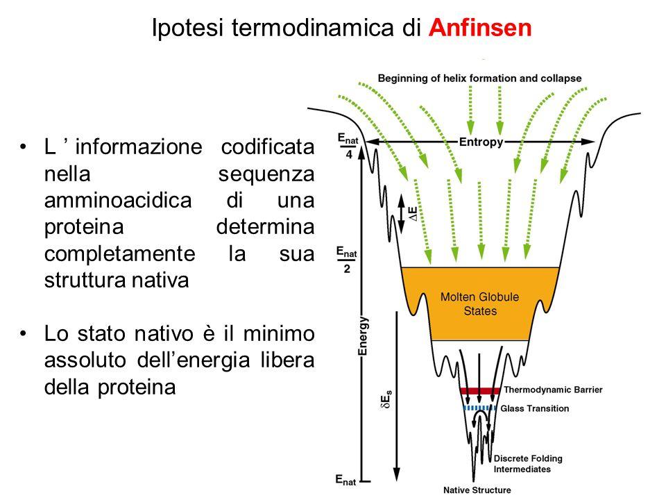 Ipotesi termodinamica di Anfinsen