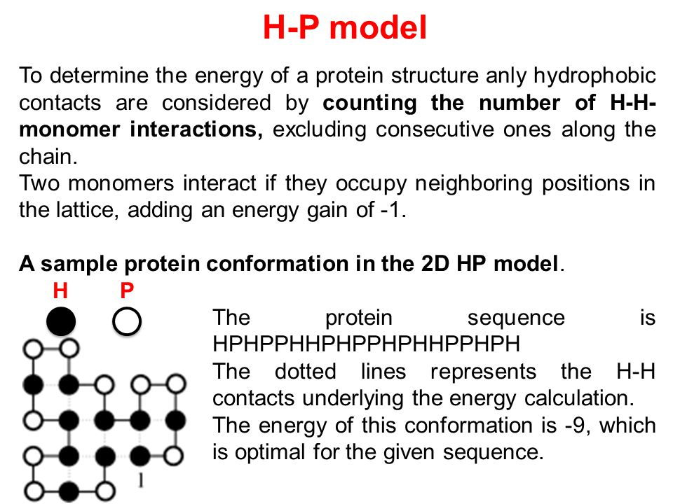 To determine the energy of a protein structure anly hydrophobic contacts are considered by counting the number of H-H-monomer interactions, excluding consecutive ones along the chain.