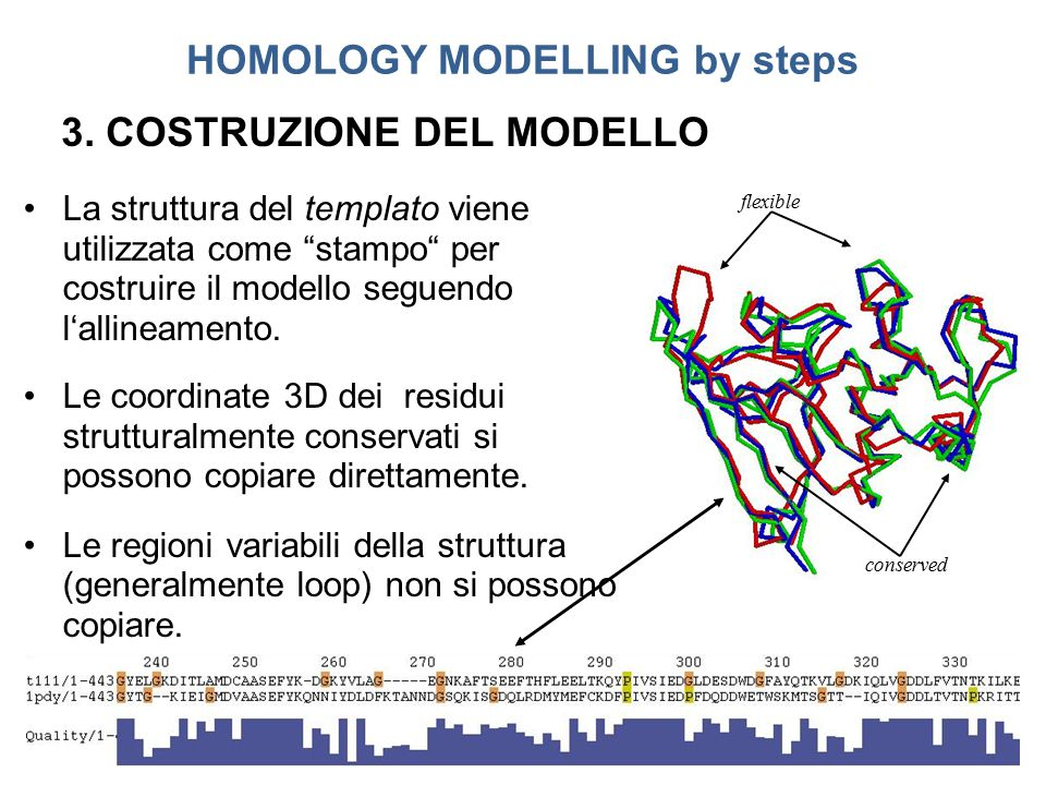 HOMOLOGY MODELLING by steps