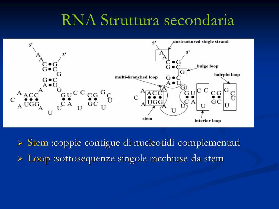 RNA Struttura secondaria
