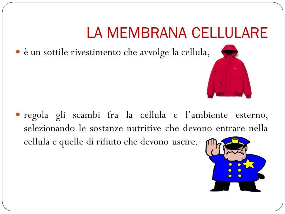 LA MEMBRANA CELLULARE è un sottile rivestimento che avvolge la cellula,