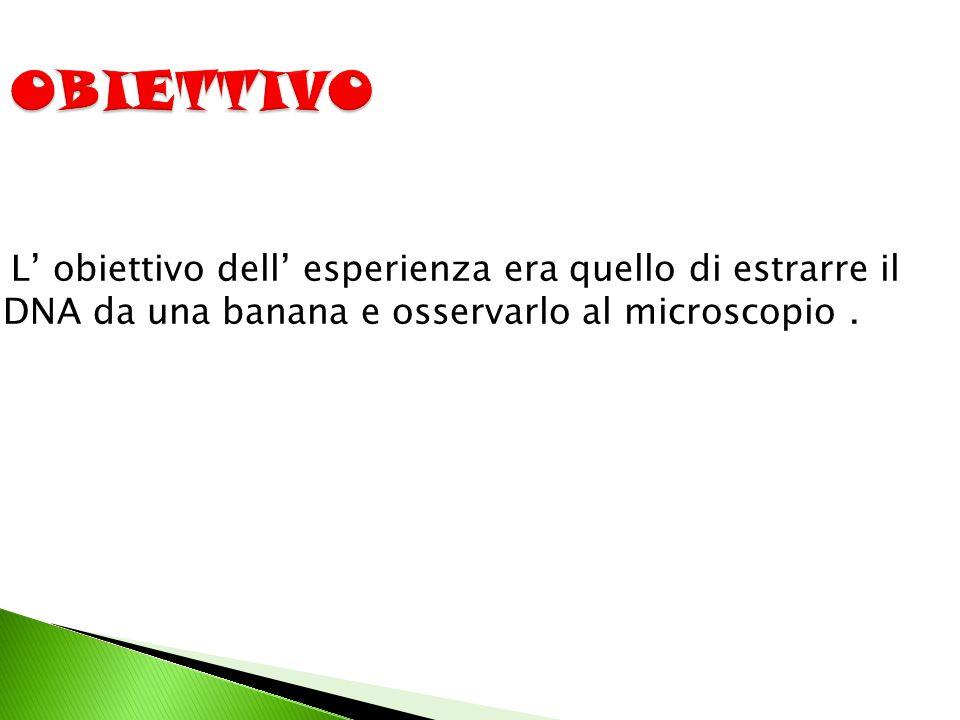 OBIETTIVO L' obiettivo dell' esperienza era quello di estrarre il DNA da una banana e osservarlo al microscopio .