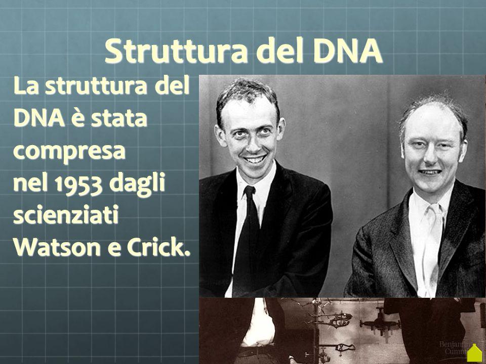Struttura del DNA La struttura del DNA è stata compresa nel 1953 dagli scienziati Watson e Crick.