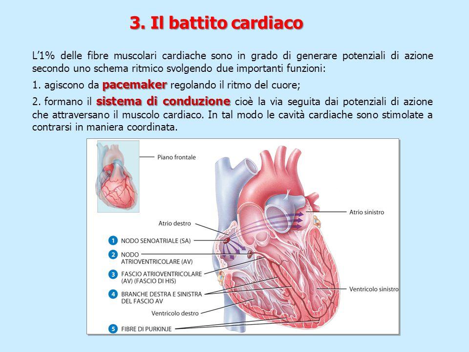 3. Il battito cardiaco