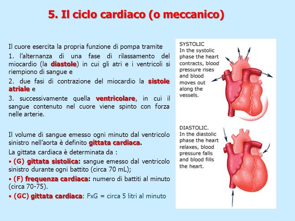 5. Il ciclo cardiaco (o meccanico)