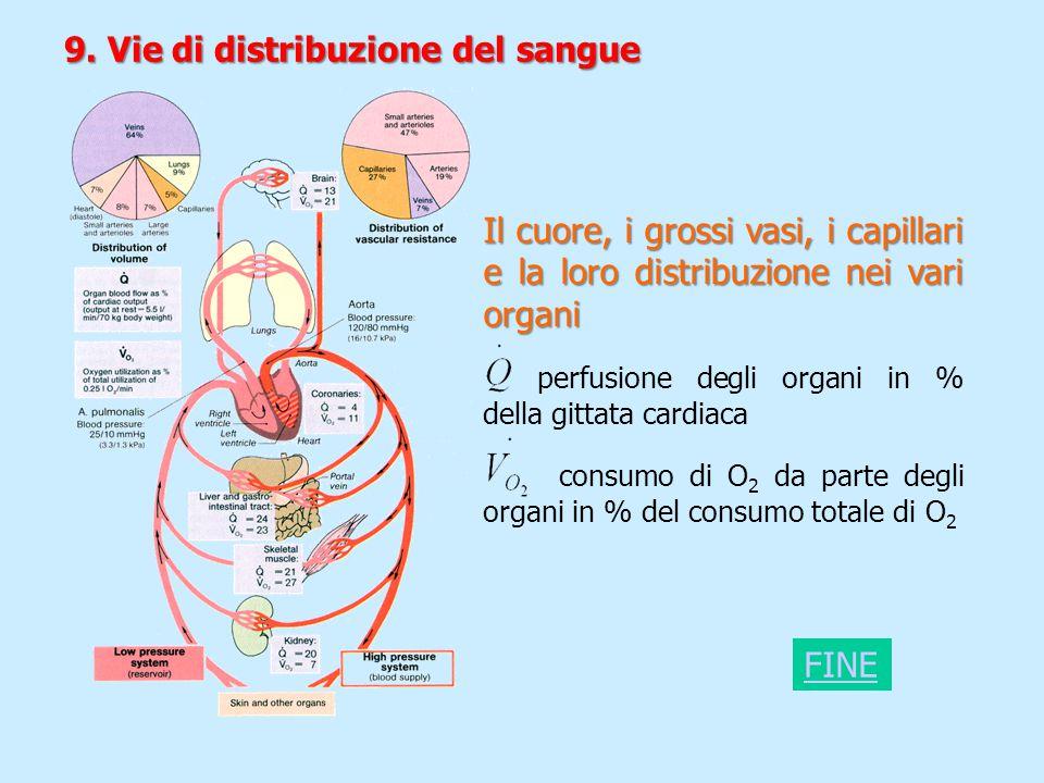 9. Vie di distribuzione del sangue