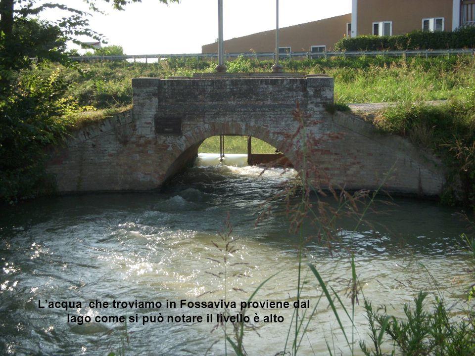 L'acqua che troviamo in Fossaviva proviene dal