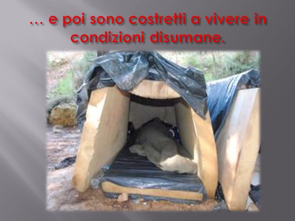 … e poi sono costretti a vivere in condizioni disumane.