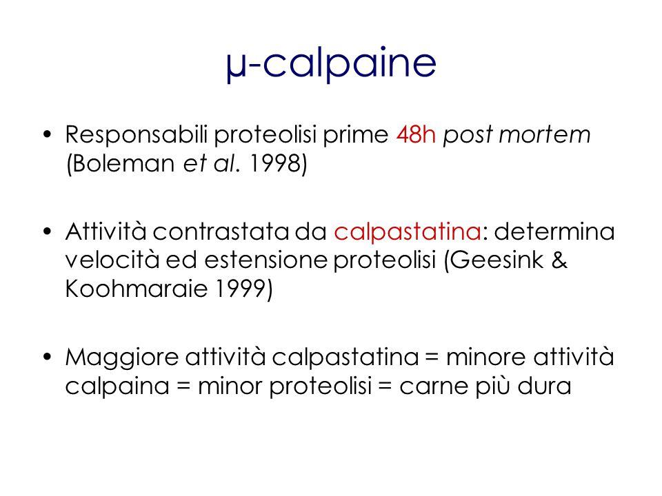 µ-calpaine Responsabili proteolisi prime 48h post mortem (Boleman et al. 1998)