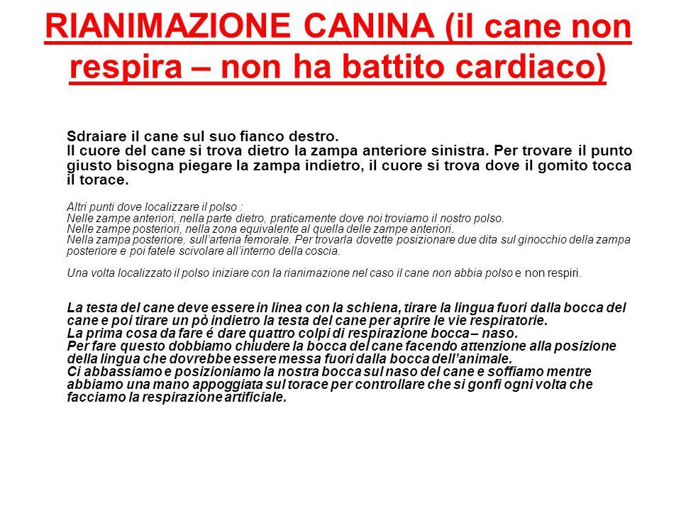RIANIMAZIONE CANINA (il cane non respira – non ha battito cardiaco)