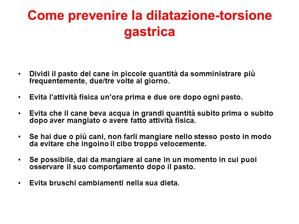 Come prevenire la dilatazione-torsione gastrica