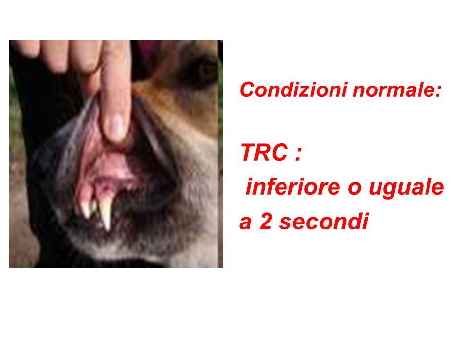 Condizioni normale: TRC : inferiore o uguale a 2 secondi
