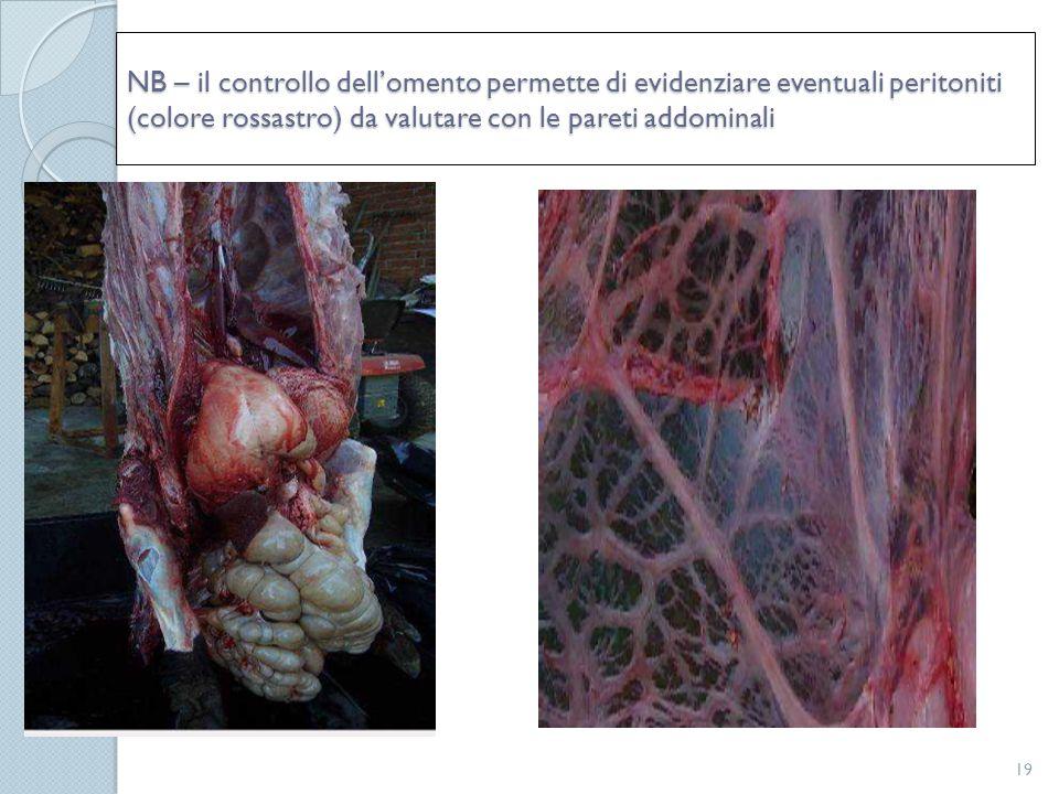 NB – il controllo dell'omento permette di evidenziare eventuali peritoniti (colore rossastro) da valutare con le pareti addominali