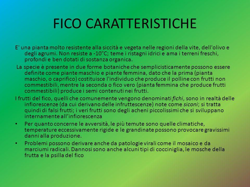 FICO CARATTERISTICHE