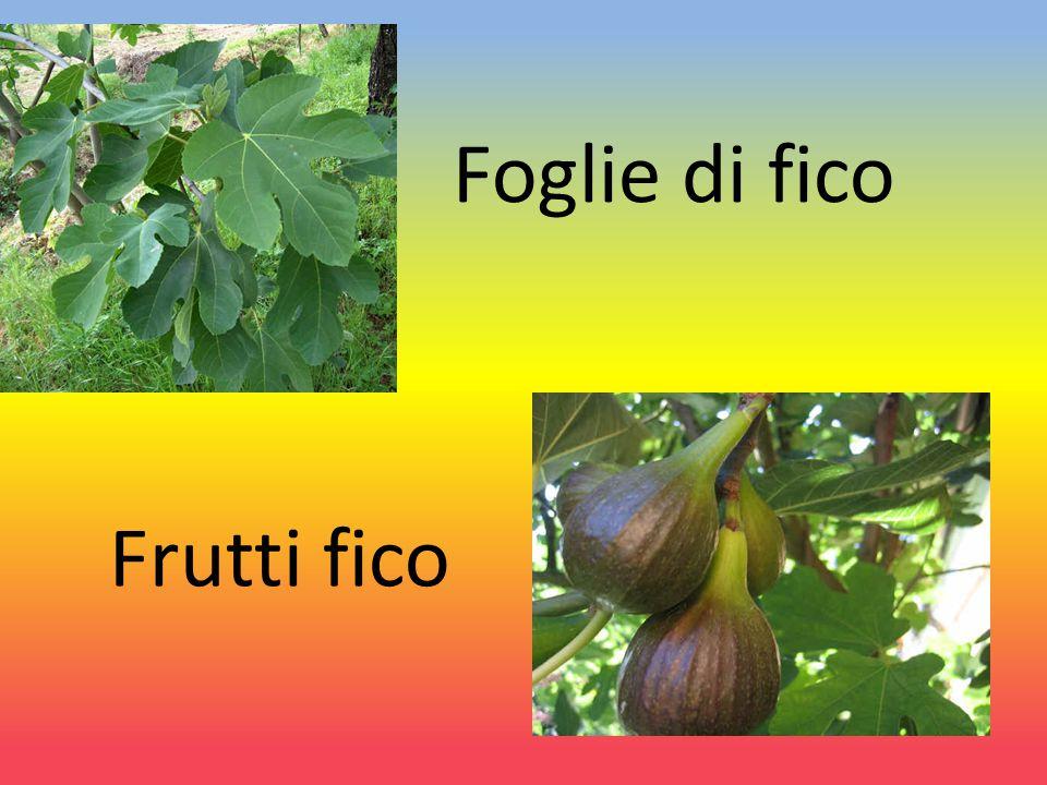 Foglie di fico Frutti fico