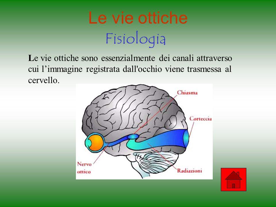 Le vie ottiche Fisiologia