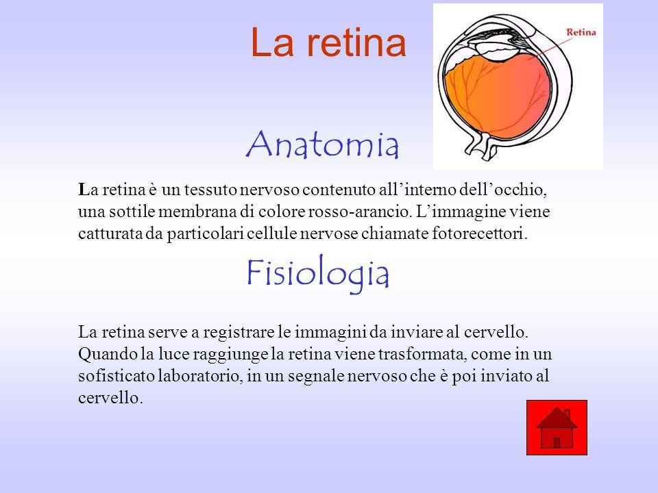 Bonito Diploma En La Anatomía Y La Fisiología Fotos - Anatomía de ...