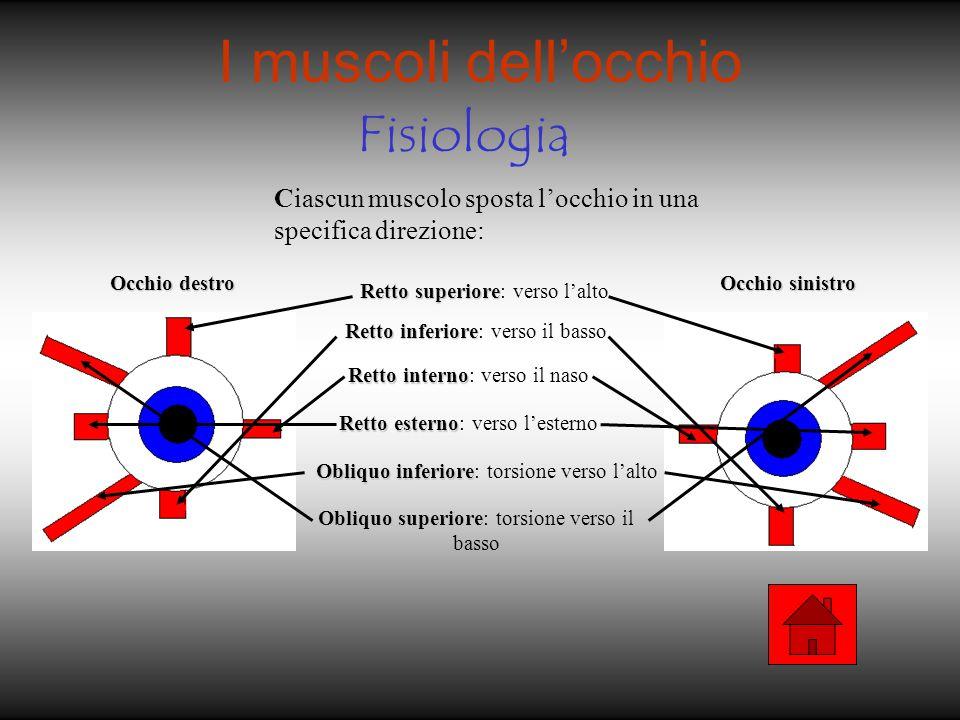 I muscoli dell'occhio Fisiologia