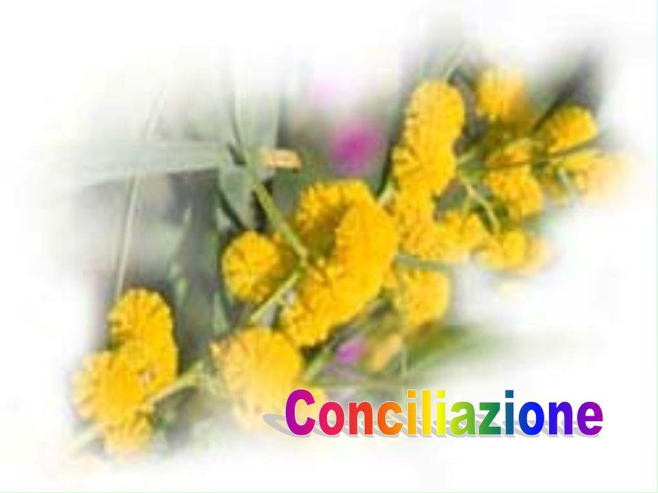 Conciliazione Conciliazione