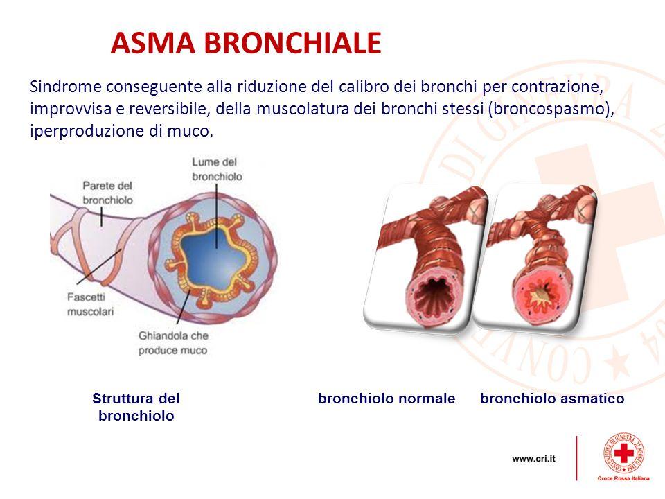 Struttura del bronchiolo