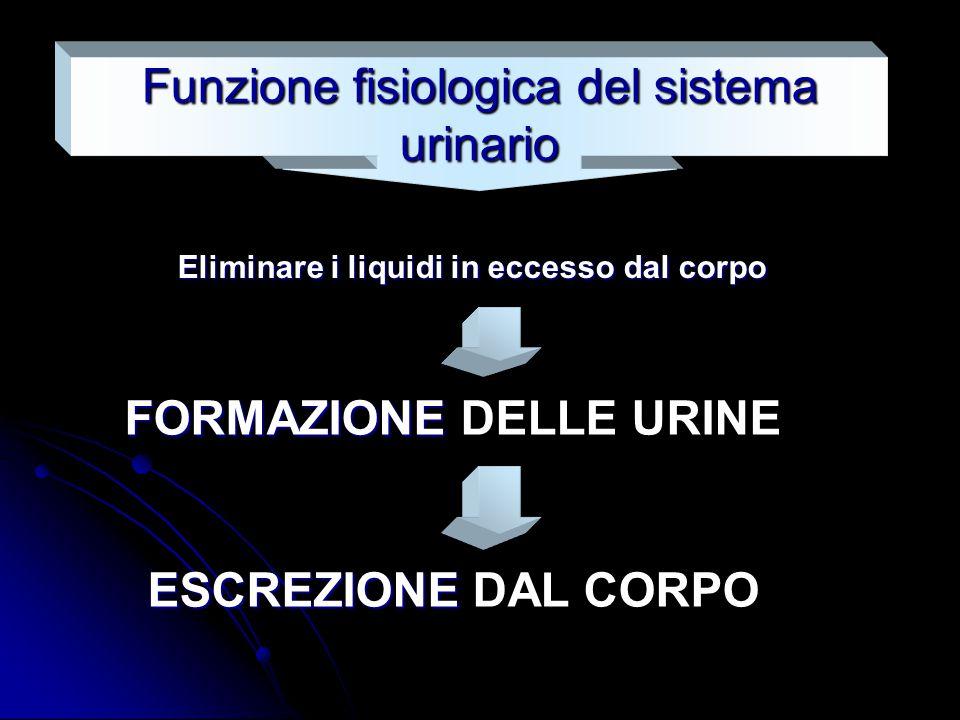 Funzione fisiologica del sistema urinario