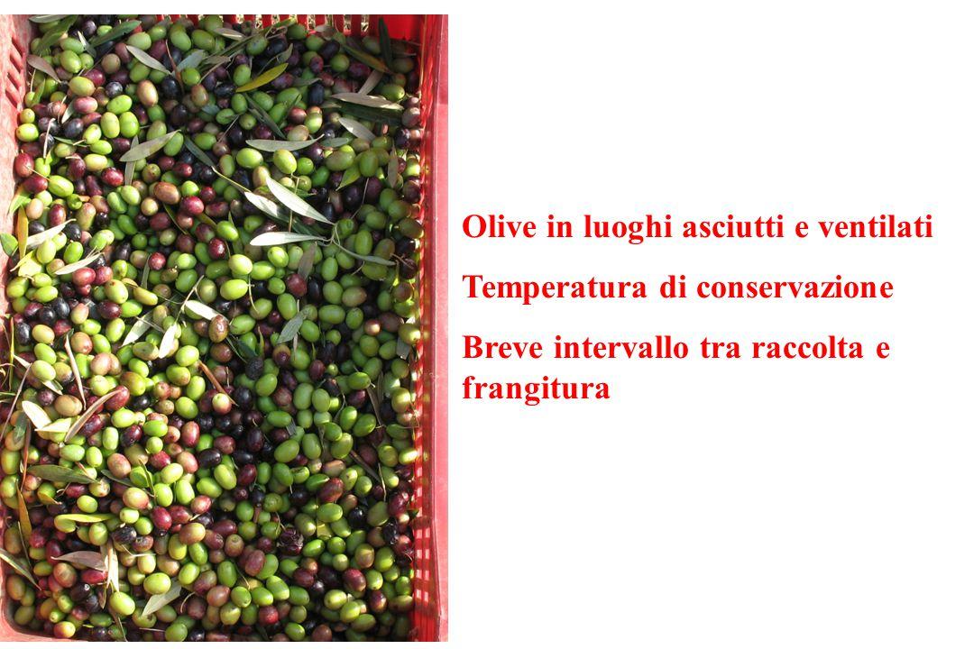 Olive in luoghi asciutti e ventilati