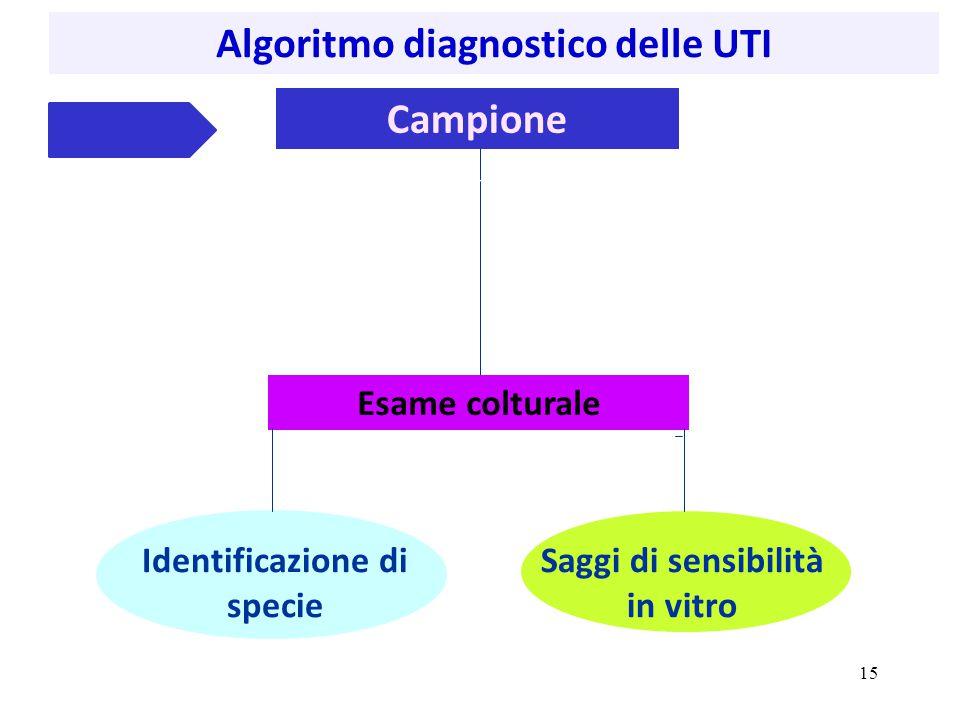 Algoritmo diagnostico delle UTI Campione