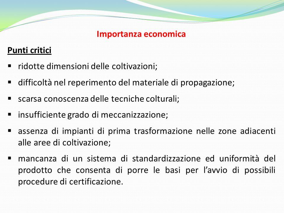 Importanza economica Punti critici. ridotte dimensioni delle coltivazioni; difficoltà nel reperimento del materiale di propagazione;