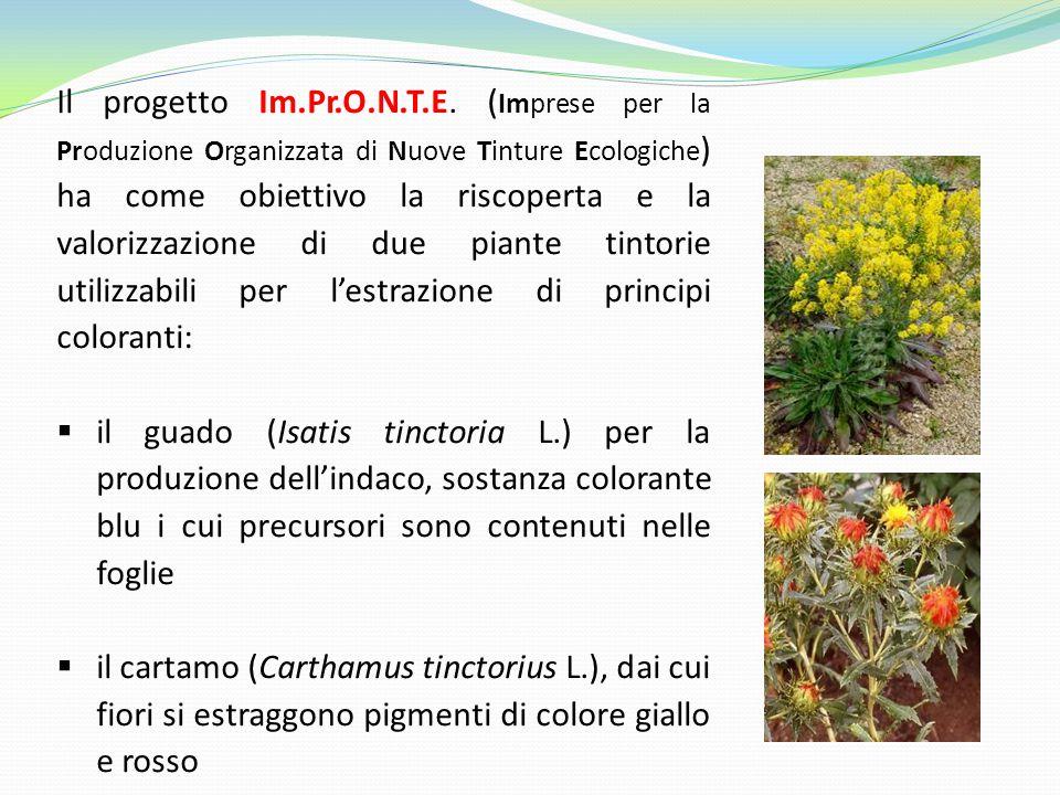 Il progetto Im.Pr.O.N.T.E. (Imprese per la Produzione Organizzata di Nuove Tinture Ecologiche) ha come obiettivo la riscoperta e la valorizzazione di due piante tintorie utilizzabili per l'estrazione di principi coloranti: