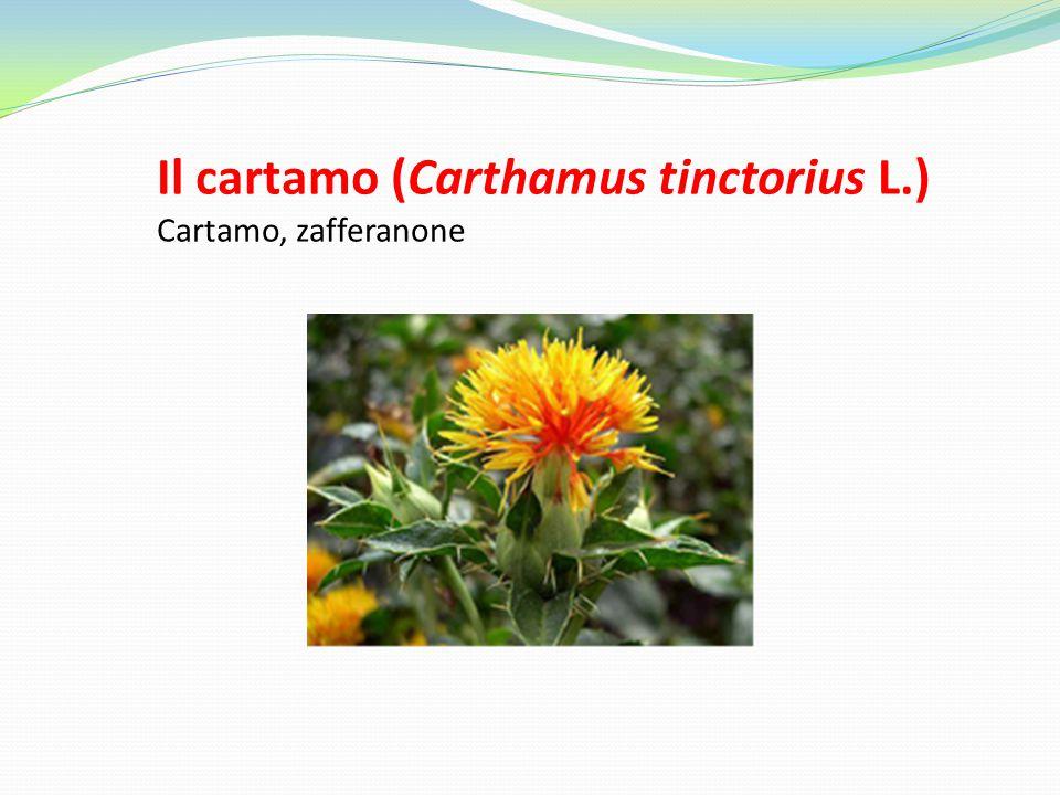Il cartamo (Carthamus tinctorius L.)