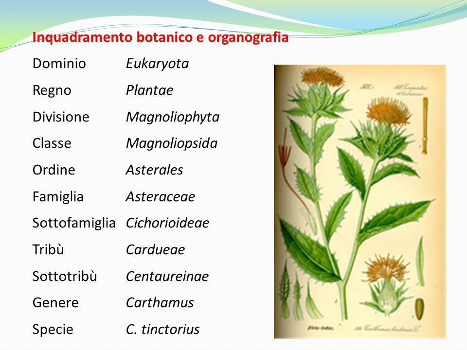 Inquadramento botanico e organografia