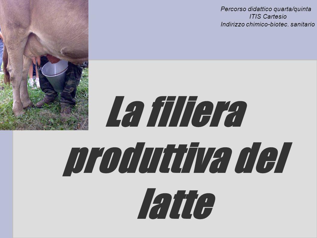 La filiera produttiva del latte
