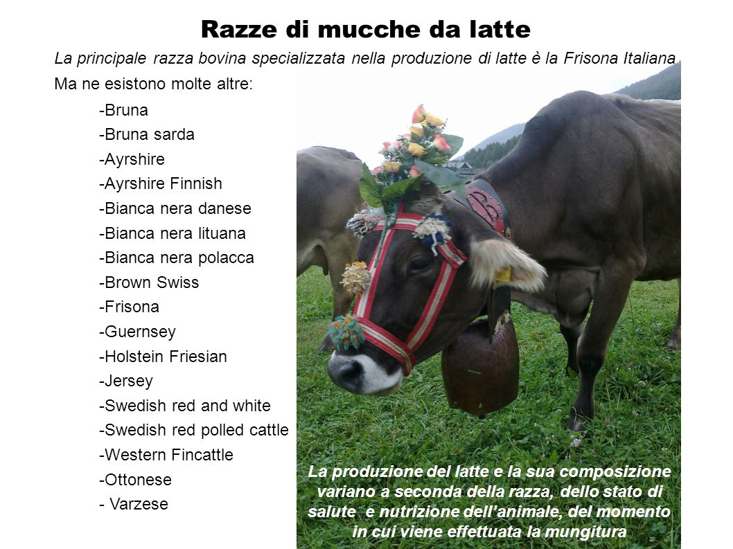 Razze di mucche da latte