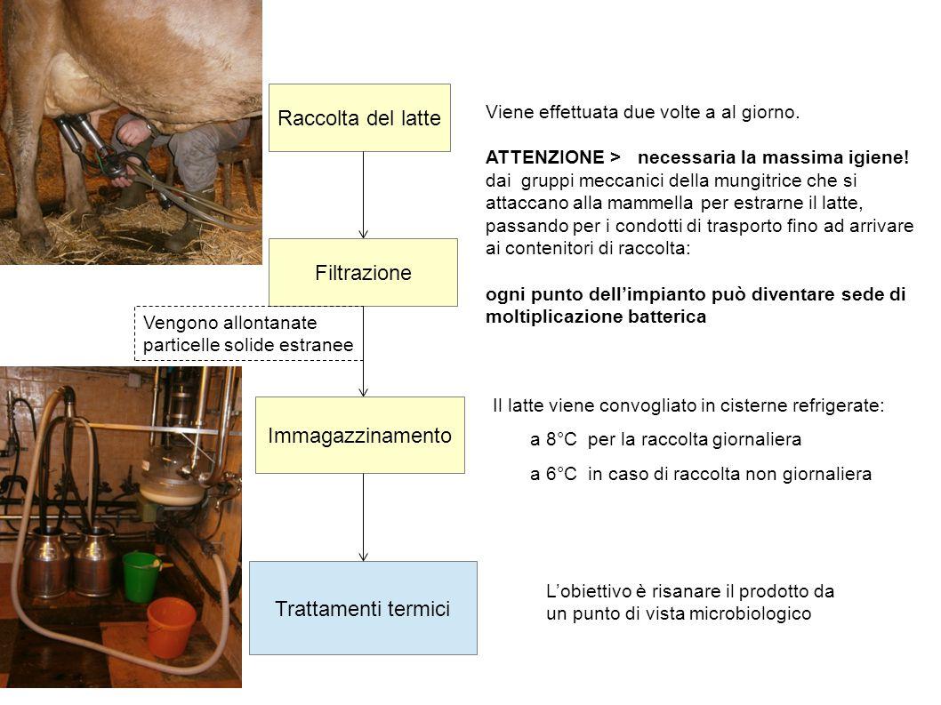 Raccolta del latte Filtrazione Immagazzinamento Trattamenti termici
