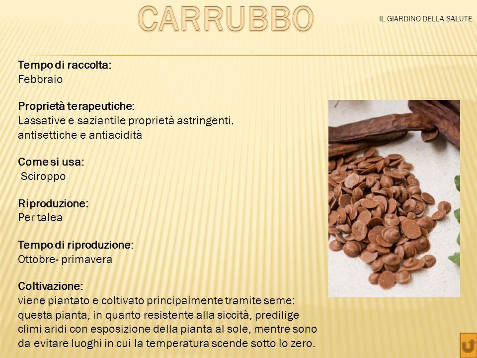 CARRUBBO Tempo di raccolta: Febbraio Proprietà terapeutiche: